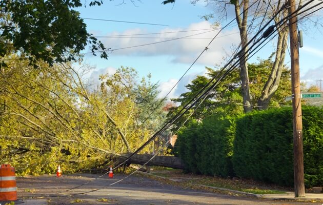 Fallen tree brought down powerlines and blocking road